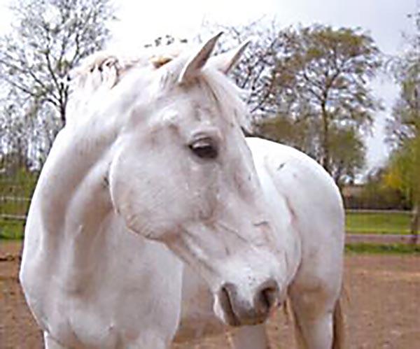 Paul Pferdegestützte Psychotherapie