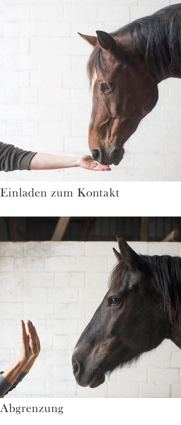 Pferdegestützte Psychotherapie Traumatherapie mit Pferden